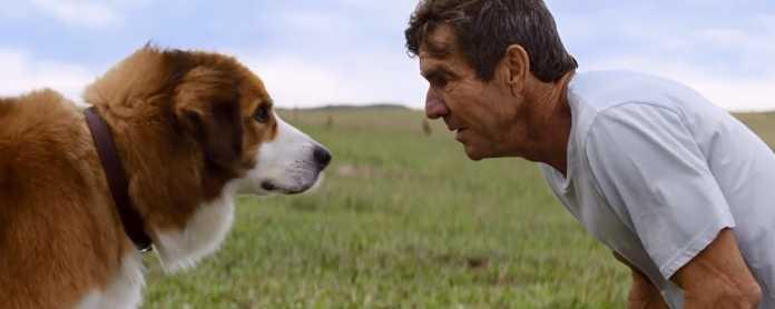 Quatro Vidas de Um Cachorro: Investigação inocenta a produção acusada de maus-tratos 1