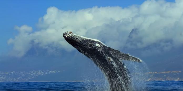 Netflix lança trailer estendido de 'Nosso Planeta' 1