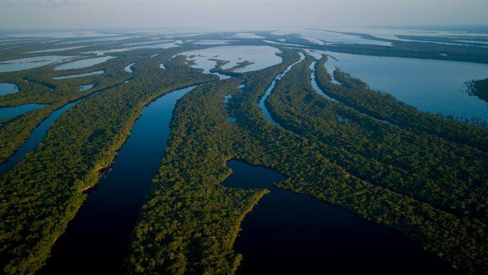 Websérie Pé no Parque mostra as belezas do Parque Nacional de Anavilhanas 1