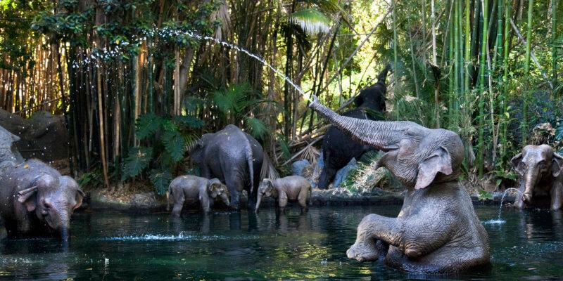 Jungle Cruise | Conheça a atração que inspirou o filme 2